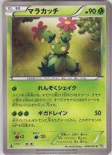 Maractus 008/053 BW1 1st